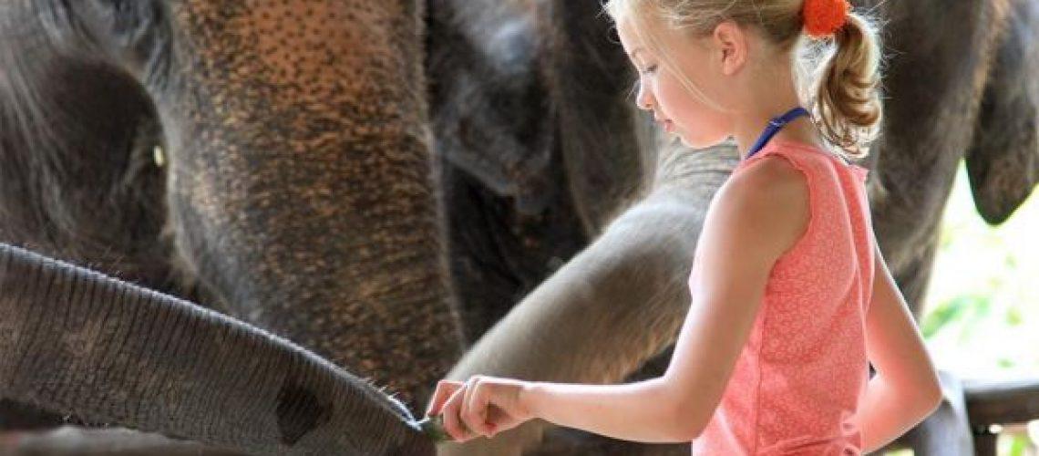 Elephant Feeding in Elephant Hills